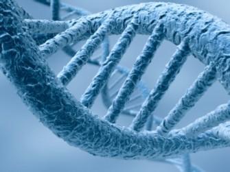 Identification d'un nouveau gène causant la scoliose et des malformations osseuses
