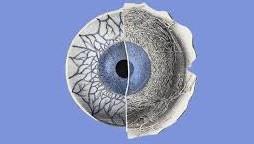 Soulager l'herpès oculaire naturellement