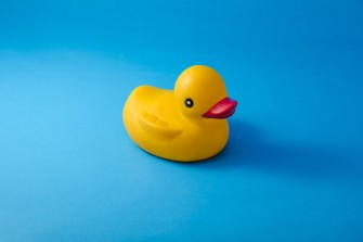 les canards en plastique: de véritables nids à bactéries
