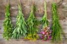 Des plantes médicinales à cultiver chez soi